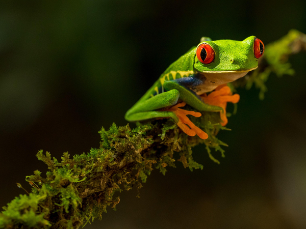Colourful FROG (fully remote organisation)