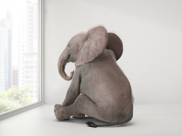 CMI-elephant-in-room-insecurity