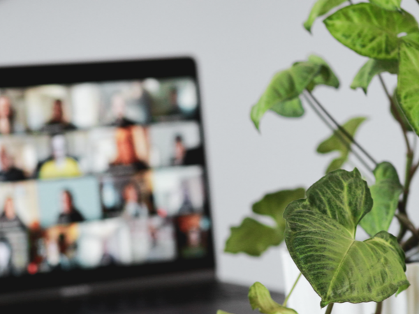 A computer on a video call with a plant beside it