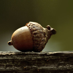 An acorn sat on top of a tree trunk